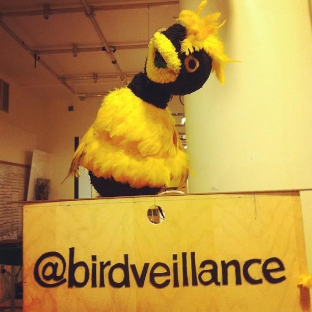 Birdveillance